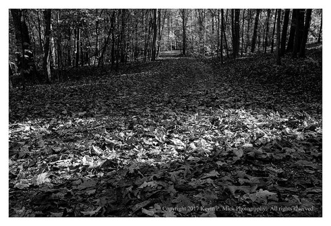 BW photograph of a leaf-covered road in WVa.