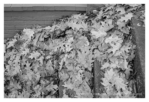 BW photograph of dried fall oak leaves piled in a stairwell.