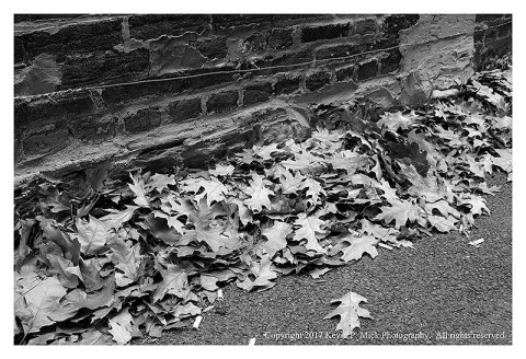BW photograph of dried fall leaves in an alley against a wall.