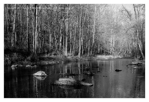 BW photograph of Morgan Run looking upstream.