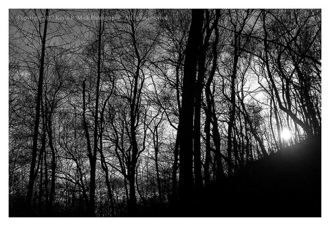 BW photograph of the sun shining through trees.