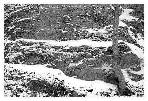 BW photograph of a lone tree against a large rock with layered snow.