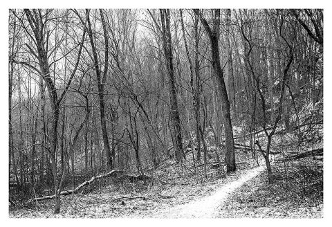 BW photograph of a snowy trail leading into the woods at Morgan Run.