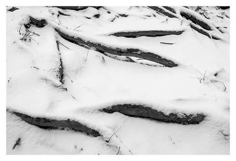 BW photograph of layered rocks and roots covered in snow.