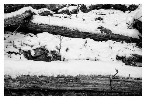 BW photograph of horizontal trees covered in snow
