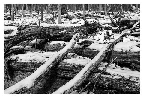 BW photograph of much deadfall laying about in winter