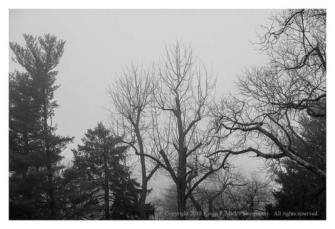 BW photograph of trees on a foggy evening.