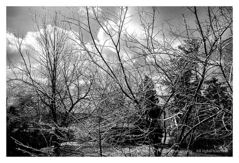 BW photograph of an icy yard with clouds in the background.