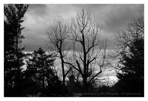 BW photograph of trees silhouetted at twilight.