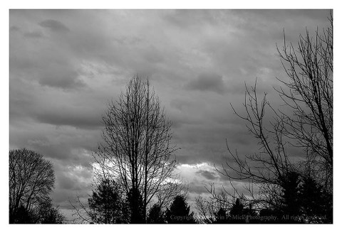 BW photograph of trees silhouetted at twilight with clouds in the background.