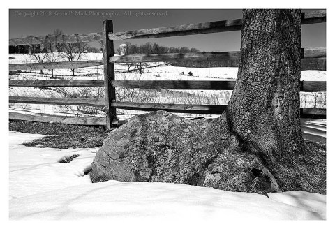 BW photograph of a tree at Cemetary Hill In Gettysburg, PA.