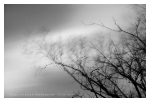 BW photograph of blurry trees blowing in a nor'easter wind against a cloudy sky.