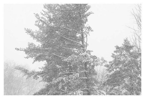 BW photograph of snow on the second day of Spring 2018.