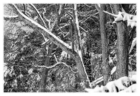 BW photograph of snow in trees on the third day of Spring 2018.