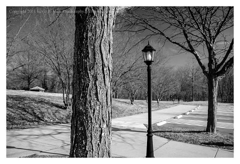 BW photograph of trees and a lampost at the Harpers Ferry Visitors Center parking lot.