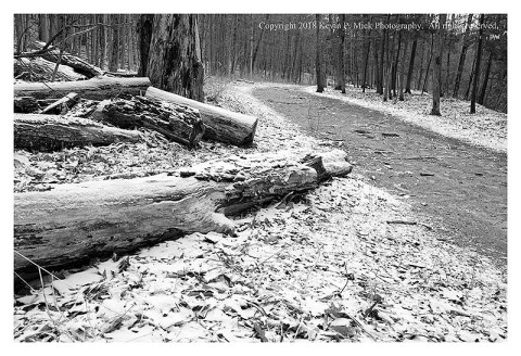 BW photograph of trees laying beside the Buttermilk Falls Rim Trail after a snowfall.