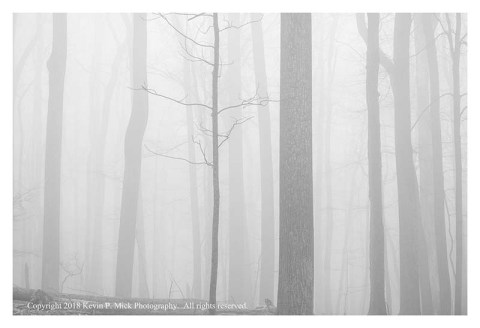 BW photograph of trees enveloped in fog.