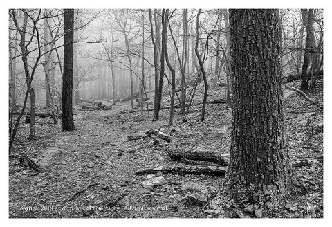BW photograph looking up the Hog Rock Trail on a foggy morn.
