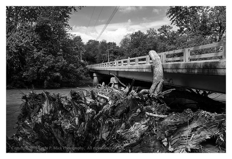 BW photograph of a fallen sycamore tree against an overpass.