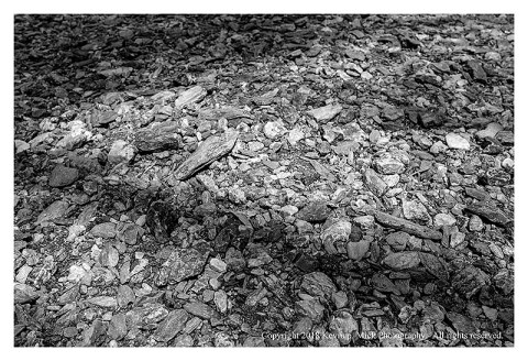BW photograph of a tree's shadow cast over a dry portion of Morgan Run rock field.