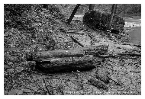 BW photograph of a section of tree trunk laying along an embankment after a flood.