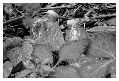 BW photograph of two plastic bottles laying among some leaves.