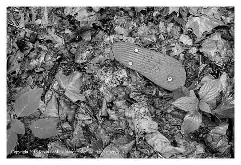 BW photograph of a flipflop laying among leaves.