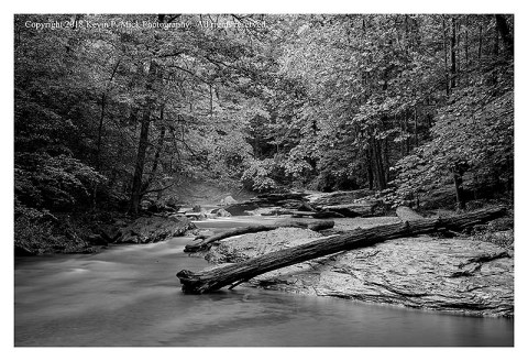 BW photograph of Morgan Run just after a rain.