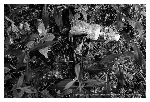 BW photograph of a plastic water bottle laying amid some plants along a hiking trail.