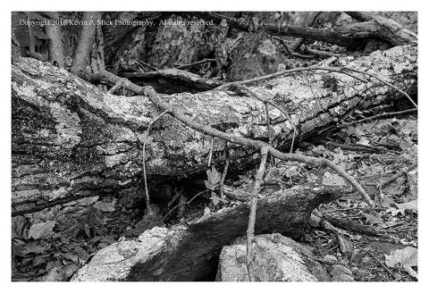 BW photograph of a downed tree laying amid some rocks.