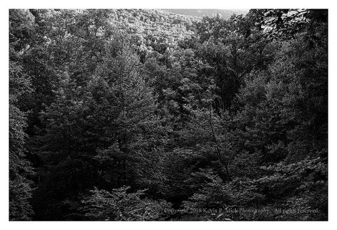 BW photograph of sunlit trees on a mountainside.