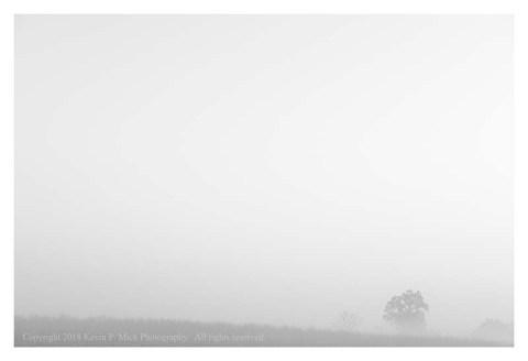 BW photograph of a fog shrouded tree across an empty field.