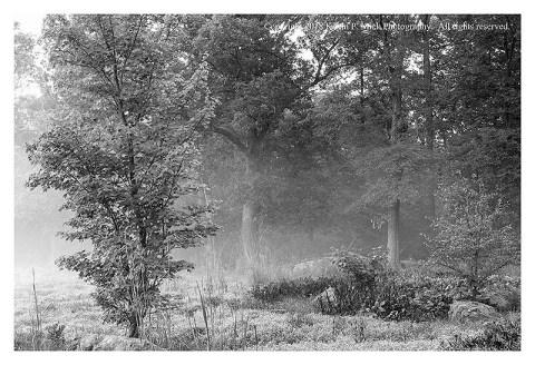 BW photograph of fog enveloped trees.