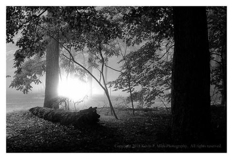 BW photograph of car headlights shining through trees on a rainy morning.
