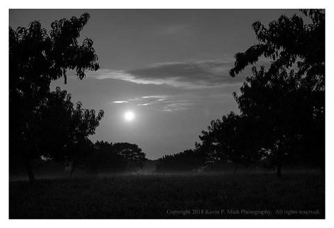 BW photograph of the moon setting between the trees in the Peach Orchard at Gettysburg.