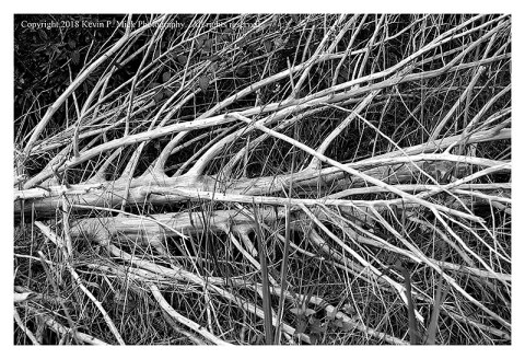 BW photograph of a downed tree bleached by the weather.