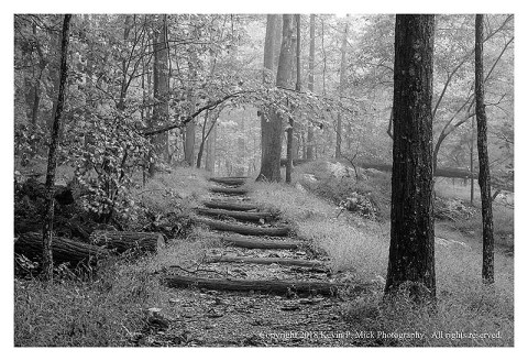 BW photograph of the Hog Rock Trail steps on a foggy morning.