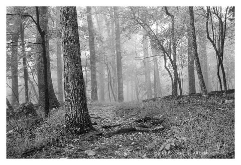 BW photograph of the Hog Rock Trail heading toward Cunningham Falls on a foggy morning.
