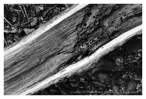 BW photograph of the split end of a tree limb laying on the ground.