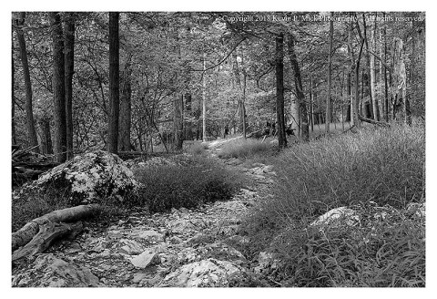 BW photograph looking down a hiking trail through the woods.