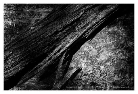 BW photograph of a tree truck laying next to a large rock with direct sunlight.
