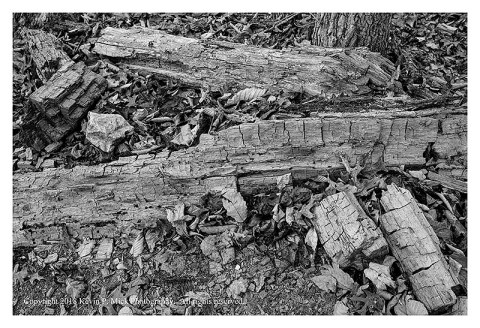 BW photograph of pieces of a decayed tree trunk.