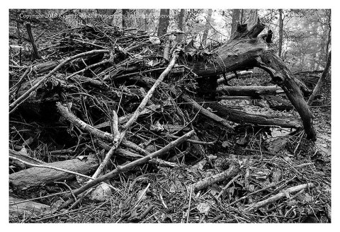BW photograph of debris from flooding at Morgan Run.