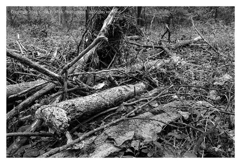 BW photograph of tree trunk debris at Morgan Run after flooding.