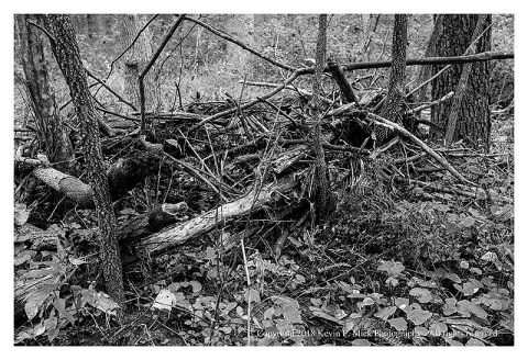 BW photograph of debris among trees at Morgan Run after flooding.