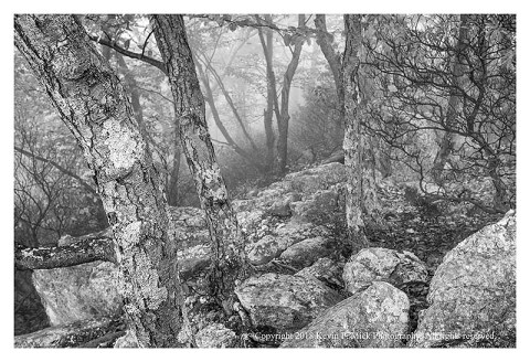 BW photograph of the woods off to the side of Chimney Rock on a foggy morning.