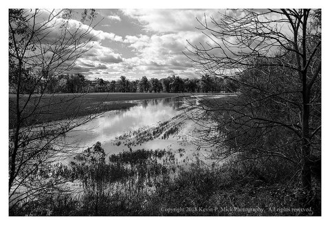 BW photograph of a flooded soy bean field after a very heavy rain.