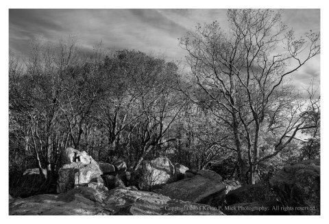 BW photograph of side lit rocks and trees at Chimney Rock.