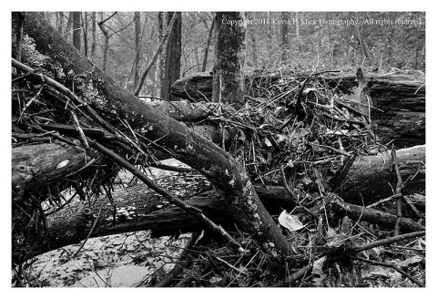 BW photograph of debris piled up after a flood at Morgan Run.