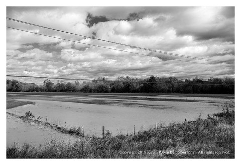 BW photograph of a flooded cow pasture after a very heavy rain.